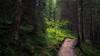 Path through an old alpine Forest (Netsrak (on/off)) Tags: tree trees baum bäume kleinwalsertal wald forst forest woods path way waldweg weg nature natur green grün at mittelberg summer sommer light licht shadow schatten alpen alps