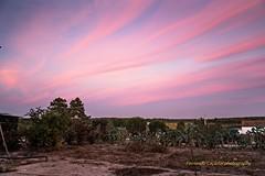 pink sky (Capturedbyhunter) Tags: fernando caçador marques fajarda coruche agolada ribatejo santarém portugal pentax k1 petri 20 f20 f2 28mm 28 landscape paisagem sunset pôr do sol manual focus focagem foco outdoor
