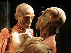 The kiss (Lorenzo Bl) Tags: lorenzo blangiardi lydser body world words anatomy anatomia amsterdam van gogh face love sax music gunther von hagens plastinazione plastination