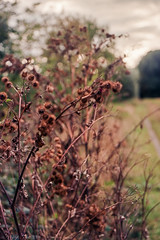 (salparadise666) Tags: busch pressman c 2x3 wollensak 101mm kodak nils volkmer germany niedersachsen hannover region color calenberger land nature autumn vintage camera press