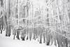20161231_WES_0019-2 (Veselin Bonev) Tags: shipka staraplanina winter monument