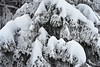 der Winter (welenna) Tags: alpen alps switzerland schwitzerland snow schnee swiss stockhorn tanne raureif nebel natur natural fog