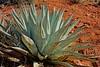 Airport Mesa trail Sedona, AZ (redrock flyer) Tags: airportmesatrail sedonaaz sedona redrocks yucca centuryplant