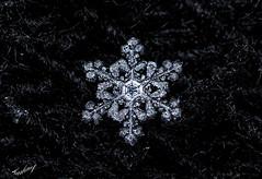 Let It Snow, Let It Snow, Let It Snow (harbinof) Tags: macromondays macro snowflakes snow song inspiredbyasong