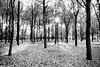 Il respiro della domenica (Valerio Santagostino) Tags: breath sunday bew black white noir tree quiet peace nature myself