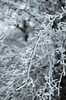 (Future Synae) Tags: nikon d5100 35mm f18 frost gel tree arbre bw blackandwhite noiretblanc closeup