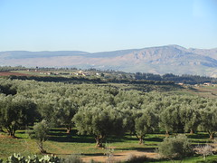 Olive grove and mountains from railway between Meknes and Fez, Morocco (Paul McClure DC) Tags: morocco fez almaghrib dec2016 scenery fèsmeknèsregion