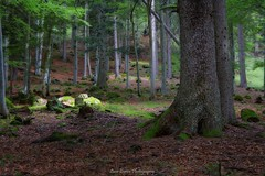 Wet Underwood (Luca Enrico Photography) Tags: trentino dolomiti valrendena vallesinella underwood woods sottobosco trees alberi boscaglia muschio forest mountain montagna musk d7100 hdr