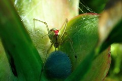 spidermum (Maudby) Tags: life macro nature spider nikon earth mother insects protection gardenlife nikond90