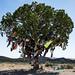 Uma árvore diferente