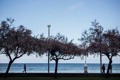 Caminando (Walking) (Dibus y Deabus) Tags: city trees people españa canon spain arboles gijón ciudad asturias calm personas 58mm gijon calma helios 6d playadesanlorenzo