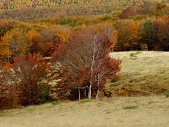 Bosco autunnale sul Pratomagno (anto_gal) Tags: alberi firenze toscana autunno montagna casentino arezzo pratomagno valdarno 2015 vetta lorociuffenna