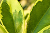 Green (esthera.marn) Tags: plant macro green nature leaves leaf outdoor foliage amazingdetails
