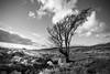 "Lone Tree - Sally Gap (shaymurphy) Tags: blue autumn ireland sky irish tree landscape bare gap sunny sally lone wicklow ""nikond700"" smp1902 ""nikkor2470"""