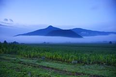 CHERÁN (NIKONIANO) Tags: morning mist nikon surreal niebla cheran nikoniano méxico michoacán nikonflickraward sergioalfaroromero amanecerenelcampo caminosdemichoacán encheran amanecerencheran cheranmichoacán michoacánelalmademéxico