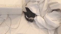 The BarkPost (messiole) Tags: cute dogs puppy eyes pups sleep lol kisses sleepy cuddly aww oops wakeup snuggly ifttt giphy