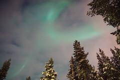 DSC00564 Aurora