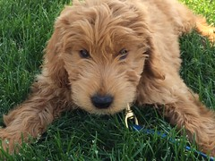 benny-loves-his-new-home--benny-is-sophia-and-crackers-little-boy_19253901790_o