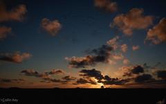 Hallig Sunset (Collin Key) Tags: norddeutschland flat tranquil landscape sunset nationalpark northsea nordsee clouds hallighooge silhouette wattenmeer tidelands house texture sky dusk 5ort tidalflats wetland schleswigholsteinwaddensea hooge schleswigholstein deutschland de