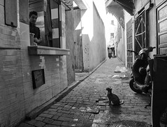 Waiting (Georgie Pauwels) Tags: cat waiting marocco street streetphotography passion candid blackandwhite moment olympus medina