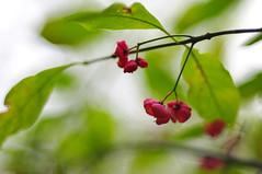 Forest fruits (Baubec Izzet) Tags: fujinon 55mm f22