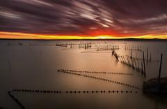 Wind (Anto Camacho) Tags: valencia longexposure sunset wind nature sunshine clouds light el saler albufera waterscape landscape
