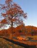 Sunny (Spottedlaurel) Tags: datsun sunny 1200 autumnsunshine japanese classic classiccar nissan autumnal