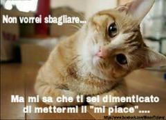 https://www.facebook.com/MossoTiziana/ #Tiziana #Mosso #Tizi #Twister #Titty #lovecat #cat #love #link #divertenti #gatti #aforisma #citazioni #buongiornoatutti (tizianamosso) Tags: divertenti tiziana citazioni link gatti lovecat titty twister tizi mosso love buongiornoatutti aforisma cat