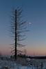 Gradient Sky (laurilehtophotography) Tags: gradient sky dead tree open field moon nature naturephotography winter scene landscape nikon d3100 nikkor 1755mm f28g lens suomi finland jyväskylä leppälahti cold forest amazing nikonphotography