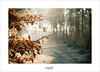 Winterlight (Zino2009 (bob van den berg)) Tags: leaves autumn winter light sunlight snow cold frost detail beech brown gold depth f14 forest holland