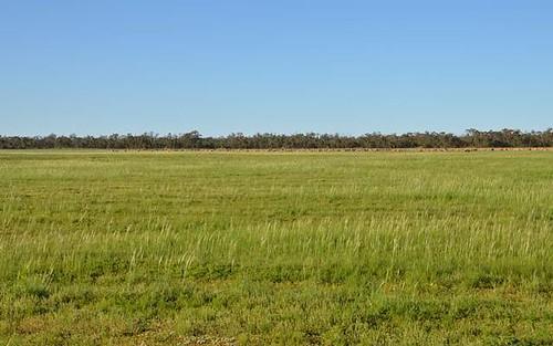 * Darling Downs, Cobar NSW 2835