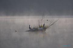 .. inverno ... (Fulvia e Gabriele : ) ....) Tags: natura animali cormorano martin pescatore fiume adda trezzo