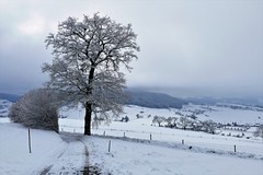 Oberhalb Möschberg und Grosshöchstetten (Martinus VI) Tags: grosshöchstetten möschberg winter winterlandschaft hiver schnee nieve snow neige kanton de canton bern berne berna berner bernese schweiz suisse svizzera suiza switzerland y150222 martinus6 martinusvi