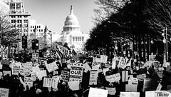 2017.02.04 No Muslim Ban 2, Washington, DC USA 00522
