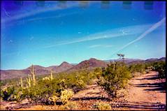 Lomography Konstruktor / Lomography 400 (K e v i n) Tags: lomographykonstruktor lomography400 35mm film analog firstroll 1stroll scan epsonv500 arizona az sonorandesert desert outside newriver blackcanyontrail saguaros cactus cacti