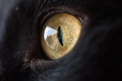 Cat's eye (and_raw) Tags: