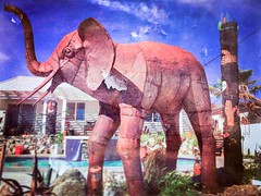 The Colonel . . It is surreal to me to see an elephant outside our bedroom window. The first time it pees in the pool though its outta here.  . . #artuocastenellos #themetalcorral #banning #metal #backyard #pool #deserthotsprings #tiki #tikipole #tikitote (hbmike2000) Tags: instagramapp square squareformat iphoneography uploaded:by=instagram hudson