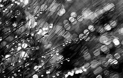 Wenn ich nach gefhlten hundert Nachtdienstkaffees fotografieren gehe, muss ich dringend pin... hm, lassen wir das. (Manuela Salzinger) Tags: morning summer sunrise drops sommer meadow wiese drop dew tau sonnenaufgang morgen tropfen