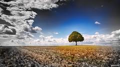 L'isole (DENISDROUAULT) Tags: champs arbre marronnier borderfx isole