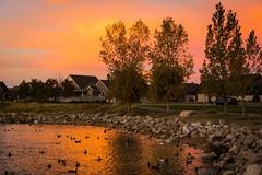 Sunset at the Local Pond (Jayaretea Snaps) Tags: sunset lake bird water reflections duck wildlife ducks waterfowl oquirrhlake