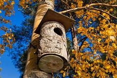 Linnunpönttö / Birdhouse (Tuomo Lindfors) Tags: tree suomi finland birdhouse puu iisalmi linnunpönttö colorefexpro niksoftware theacademytreealley luuniemi