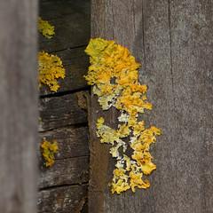 Geel Explore 20150922 (Olga and Peter) Tags: yellow germany regensburg geel duitsland fp1080746