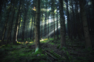 Bright light in dark forest