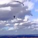 Sail the Sky - original