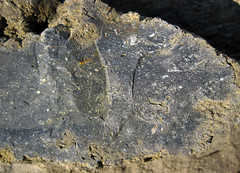 Fossiliferous chert nodule in fossiliferous limestone (Boggs Limestone, Pennsylvanian; Rt. 93 roadcut north of Mt. Pleasant, Hocking County, Ohio, USA) 5 (James St. John) Tags: county ohio fossil mt group limestone member hocking pleasant fossils fossiliferous nodules chert boggs pottsville limestones nodule pennsylvanian