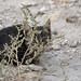 cats of jordan 11-2015 -p4d- 436