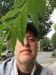 Day 1388 - Day 293: Behind the leaf (knoopie) Tags: selfportrait me october doug picturemail iphone day293 2015 year4 knoop 365days knoopie 365more day1388 365daysyear4