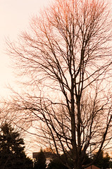 DSC_8669 (louis_mancuso) Tags: blue winter sunset field geese twilight corn cornfield pennsylvania farm goose pa newtown goldenhour yardley newtownpa flyingsouth newtownpennsylvania geeseflyingsouth shadybrookfarm yardleypa yardleypennsylvania winter2015 shadybrookfarmyardleypa shadybrookfarmyardley gooseflyingsouth