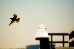 Fly away (Gonzak) Tags: sky people music bird rock uruguay fly photo nikon flickr gente movida recital away toque ave cielo alas musica pajaro montevideo bandas uru gettyimages vuelo uz sentimiento 2015 guz wowiekazowie gonzak useta lovelymotherearth gonzakfotos