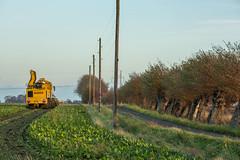 3U4A1458 (Bad-Duck) Tags: vinter mat ropa hst ker betor kvll skrd flt jordbruk lantbruk rstid livsmedel sockerbetor fltarbete livsmedelsproduktion betupptagare